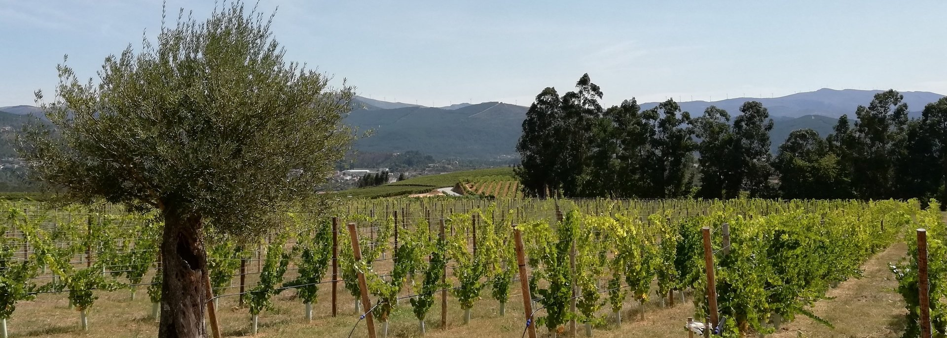 The nature and the vineyard that embraces the Quinta da Raza winery.